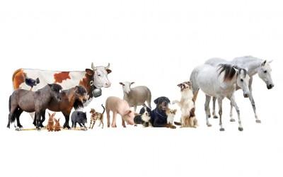 La Charte des Animaux